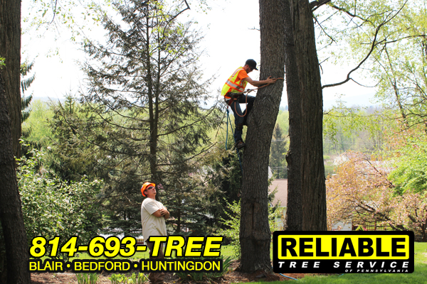 altoona_tree_service