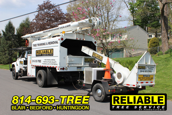beford_tree_service