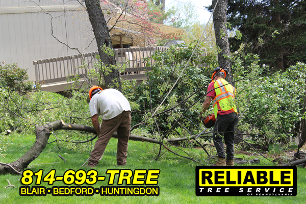 emergency_tree_service