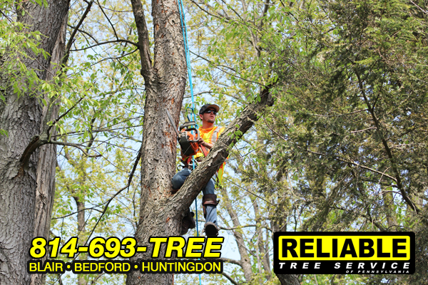 huntingdon_tree_service