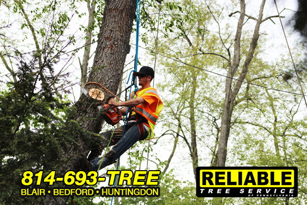 tree_trimming_service