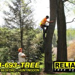 A tree service worker on a property in Altoona.