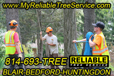 Reliable Tree Service employees pursuing their careers in tree service.