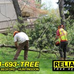Reliable Tree Service workers remove a tree that fell in a storm.