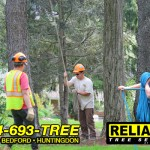 Reliable Tree Service workers prepare to grind a stump.