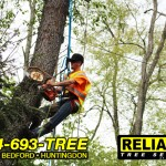 A man uses a chainsaw to cut down a tree.